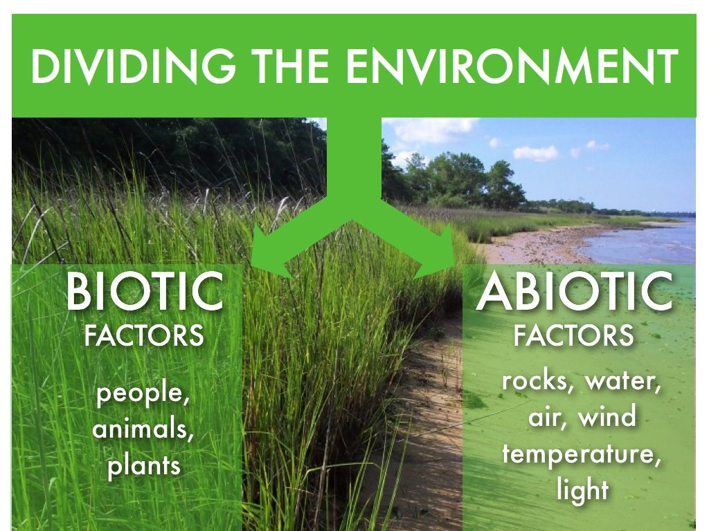 what is an example of abiotic