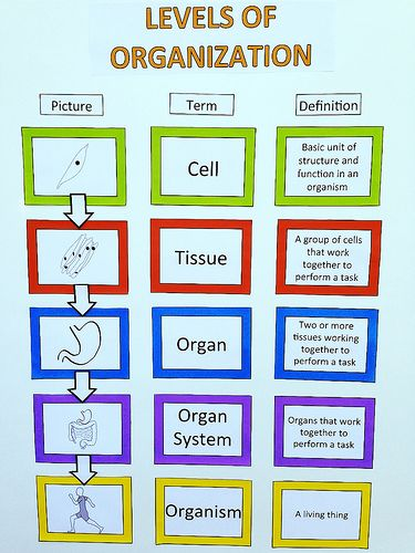 an example to describe how the human body is organized