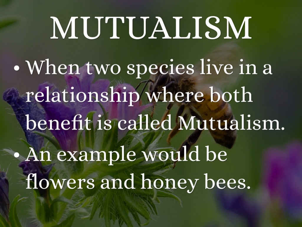 difference between mutualism and commensalism example