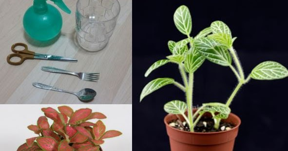 5 example of stem cutting plants