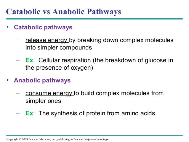 what is an example of a catabolic reaction