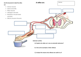 example of somatic voluntary nervous system response